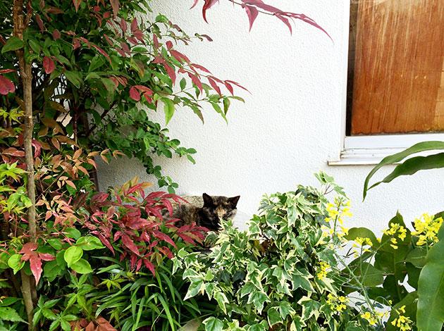 植物と斑猫