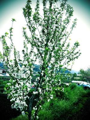 2011春の風景3