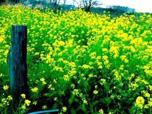 2011春の風景2